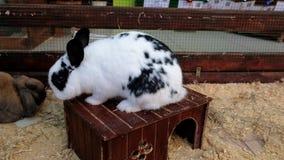 Poco conejos en un parque zoológico del contacto Niño lindo con el conejito almacen de video