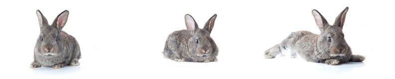 Poco coniglietto Fotografia Stock