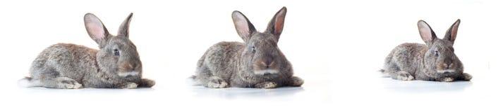 Poco coniglietto Immagini Stock