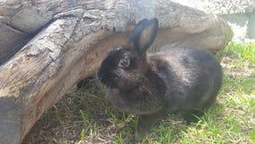 Poco coniglietto Fotografie Stock