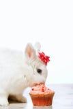 Poco coniglietto che si siede dal bigné immagini stock libere da diritti