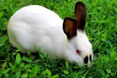 Poco coniglietto sul prato fotografia stock libera da diritti