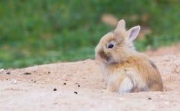 Poco coniglietto sveglio fotografie stock