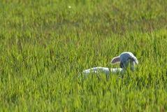 Poco cordero en un prado verde en la puesta del sol imagen de archivo
