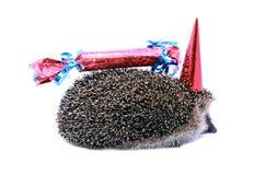 Poco erizo del bosque en un sombrero festivo y con un regalo aislado Foto de archivo