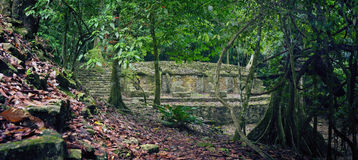 Poco estudio de estructuras arqueológicas en la selva en la a Fotos de archivo