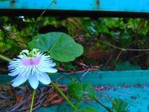 Poco fiore Fotografie Stock Libere da Diritti