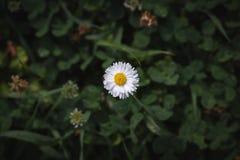 Poco fiore bianco fotografia stock