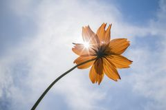 Poco fiore brillante Immagini Stock Libere da Diritti