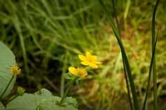 Poco fiore giallo immagini stock