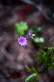 Poco fiore microscopico minuscolo Fotografia Stock Libera da Diritti