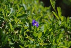 Poco fiore porpora sul campo verde Fotografia Stock