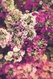 Poco fiore rosa come fondo Fotografie Stock Libere da Diritti
