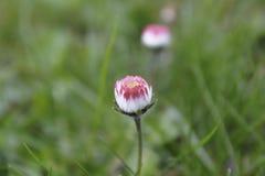 Poco fiore selvaggio rosa fotografia stock