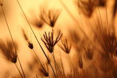 Poco fiore in un grande campo Fotografie Stock