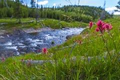 Poco fiume di Firehole vicino alle cadute mistiche Fotografie Stock Libere da Diritti