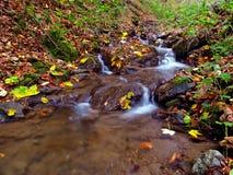 Poco flusso dell'acqua Immagini Stock Libere da Diritti