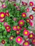 Poco fondo rosado de la flor fotografía de archivo libre de regalías