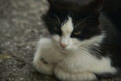 Poco fronte di un gatto Immagini Stock Libere da Diritti