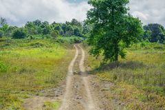 Poco fuori strada nelle foreste Fotografia Stock Libera da Diritti