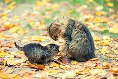 Poco gatito con el gato de la madre en un jardín fotografía de archivo libre de regalías