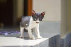 Poco gatito con un bigote como la caza de Hitler fotos de archivo