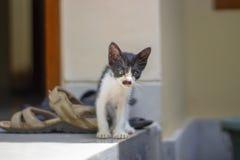 Poco gatito divertido con un bigote como Hitler foto de archivo libre de regalías