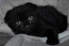 Poco gatito negro con los ojos tristes imágenes de archivo libres de regalías