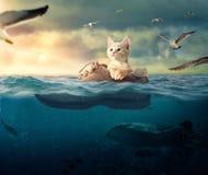 Poco gatito que flota en su bota del barco fotografía de archivo libre de regalías