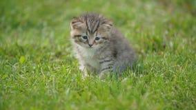 Poco gatito que se sienta en la hierba verde almacen de video