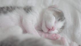Poco gatito recién nacido lindo que duerme en la cama Pequeñas aspiraciones y contracciones nerviosas del gatito en una forma de  metrajes