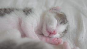 Poco gatito recién nacido lindo que duerme en la cama Pequeñas aspiraciones y contracciones nerviosas del gatito en una forma de  almacen de video