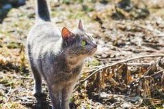 Poco gato gris con los ojos verdes en el jardín de la primavera foto de archivo libre de regalías