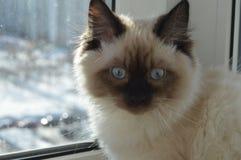 Poco gato sorprendido que se sienta en la ventana fotos de archivo libres de regalías