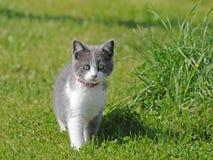 Poco gattino dell'azienda agricola Fotografia Stock