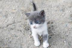 Poco gattino sveglio della via immagine stock