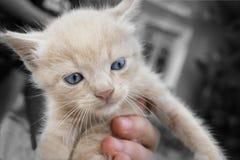 Poco gattino sveglio della via fotografia stock libera da diritti