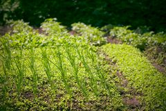 Poco giardino Fotografie Stock