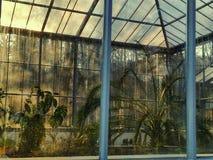 Poco giardino Immagini Stock