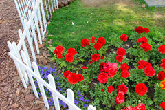 Poco giardino del fiore rosso Immagini Stock