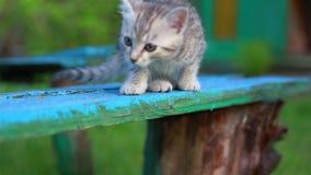 Poco Gray Kitten Play juguetón y funcionamiento en una hierba verde almacen de metraje de vídeo