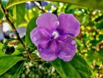 poco ieri oggi e domani fiorisce con le gocce di pioggia sulla a Fotografie Stock