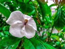 poco ieri oggi e domani fiorisce con le gocce di pioggia sulla a Immagine Stock Libera da Diritti
