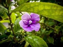 poco ieri oggi e domani fiorisce con le gocce di pioggia sulla a Immagini Stock Libere da Diritti