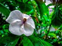 poco ieri oggi e domani fiorisce con le gocce di pioggia sulla a Fotografie Stock Libere da Diritti