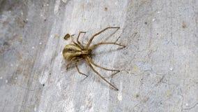 Poco insectos venenosos del aspecto feo foto de archivo