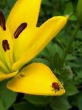 Poco insetto fotografie stock