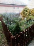 Poco jardín Imagen de archivo libre de regalías
