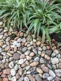Poco jardín con la tierra de piedra Imágenes de archivo libres de regalías