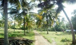 Poco jardín de los árboles de coco en el patio de hogares indios Foto de archivo